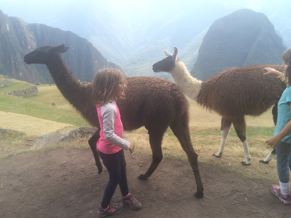 Amy's buddies at Machu Picchu