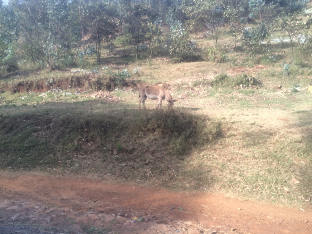 A random donkey at the side of the road. We passed lots of sheep, goats, and to a lesser extent, cattle.
