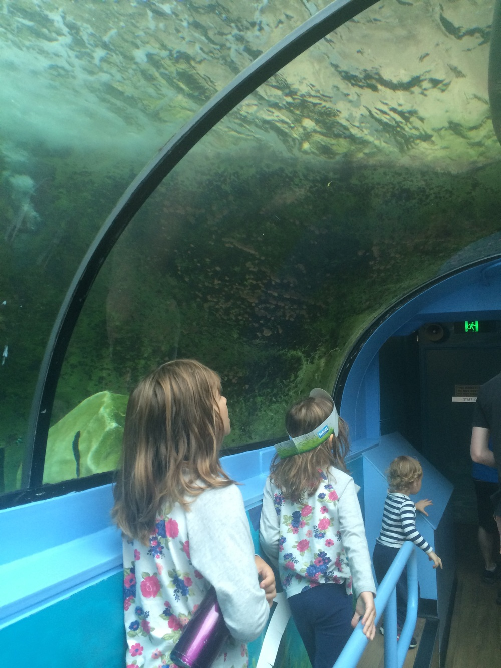 The girls under the shark tunnel. This type of viewing tunnel ws created by a New Zealander