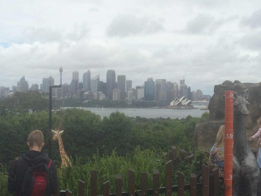 Can you spot the Opera House? This is our view from the zoo.