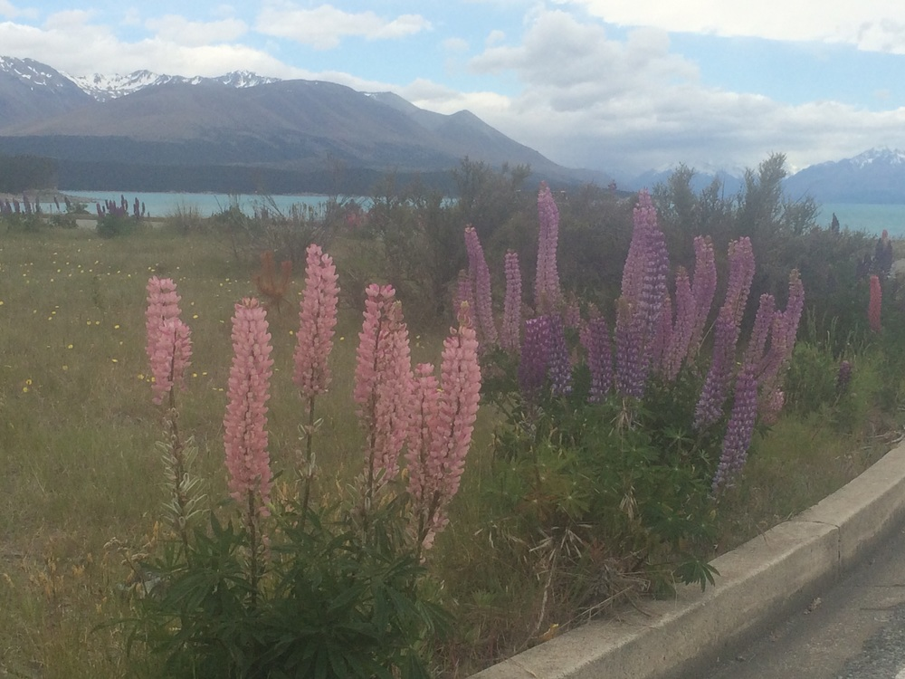 If you see the lupins, you're getting close to a lake.