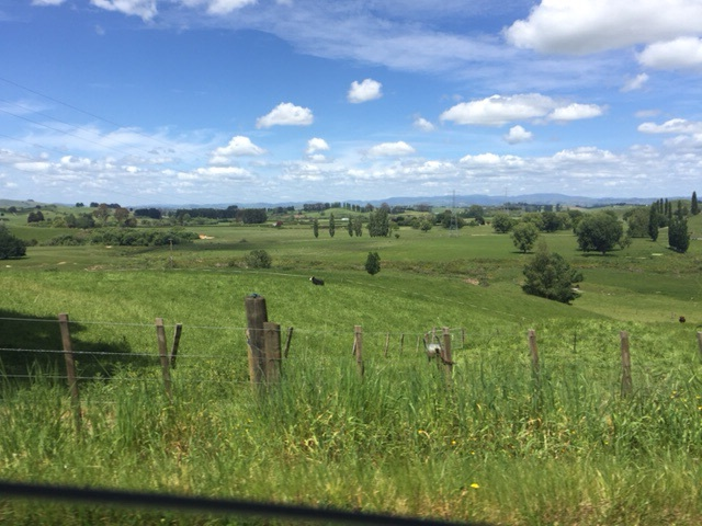 Miles & miles of farmland. Sheep still outnumber people in NZ, but the gap is closing.