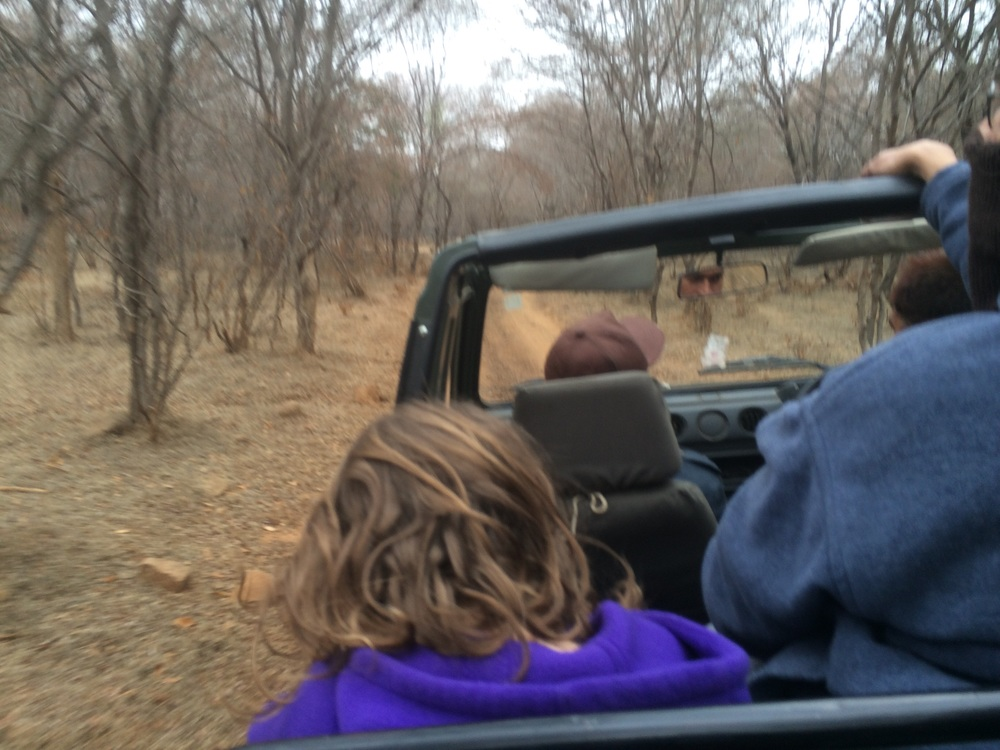 Amy in the jeep. Ranthambhore is a semi-arid deciduous forest.