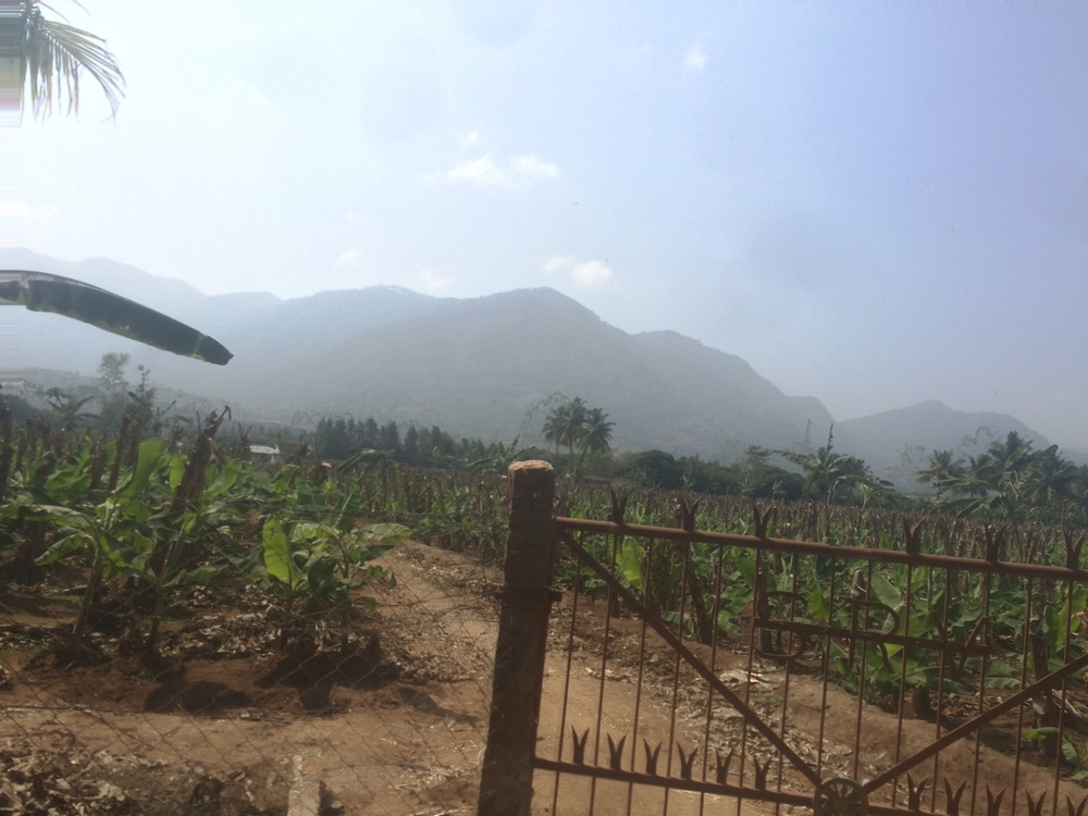 The valley is so beautiful with the mountains surrounding it.  These are young banana trees.