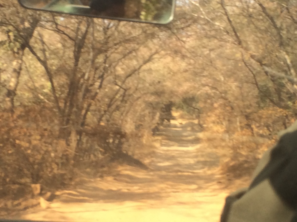 Ranthambhore was very different from the other parts of India that we've seen to date.