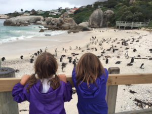 Checking out the African penguins