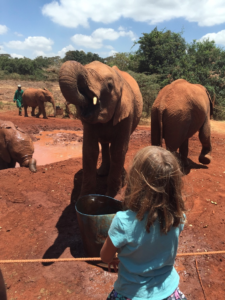 Hannah loved seeing the baby elephants up close!