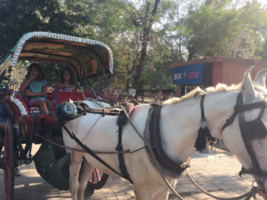 Taking a horse and carriage ride on the way back from the Taj Mahal