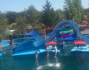 Bottlenose dolphins performing in the show Drench!