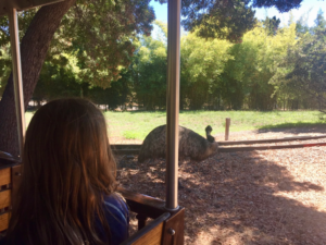 Seeing an emu from the train