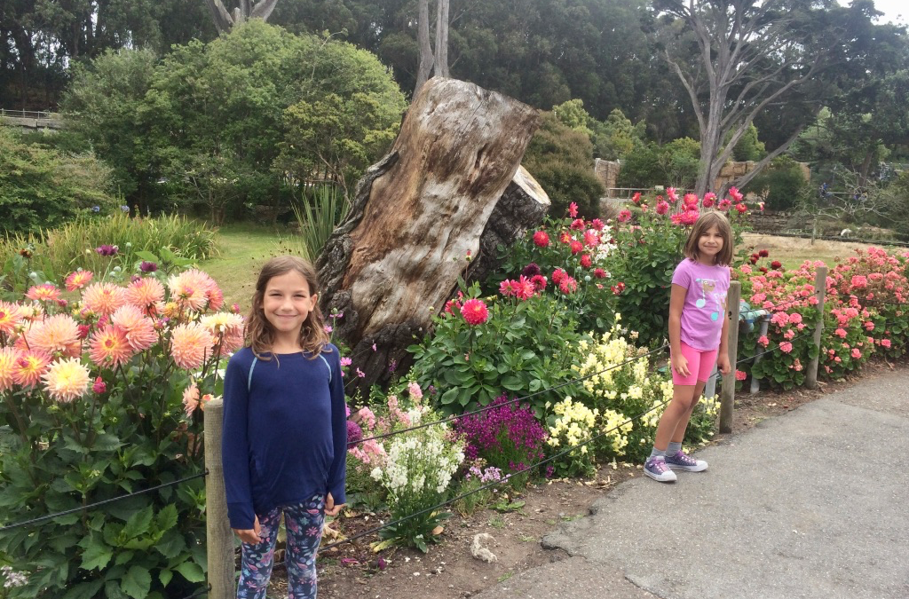 A Family Guide to the San Francisco Zoo (San Francisco, California)