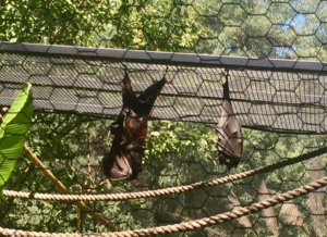 Bat Exhibit
