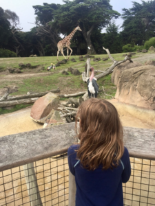 Amy checking out the Giraffe & Marabou Stork (African Region)